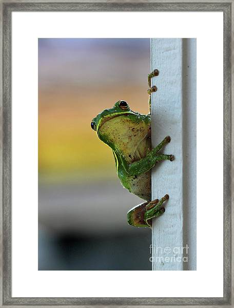 Green Tree Frog  It's Not Easy Being Green Framed Print