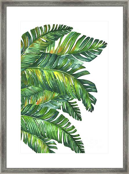 Green Tropic  Framed Print