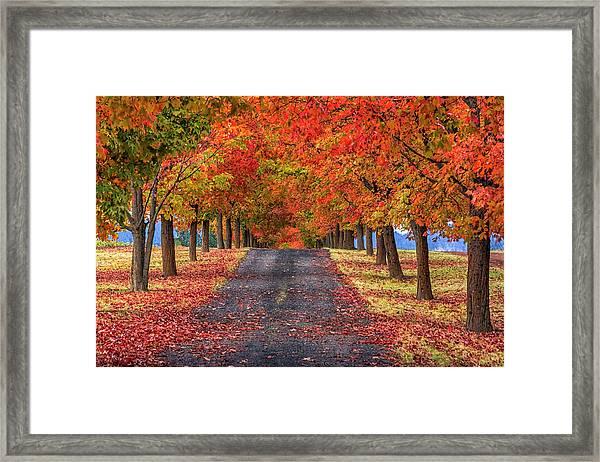 Greenbluff Autumn Framed Print