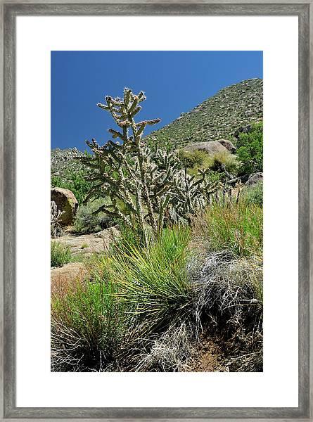 Greening Of The High Desert Framed Print