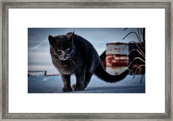 Grey Cat, Grey Mood Framed Print