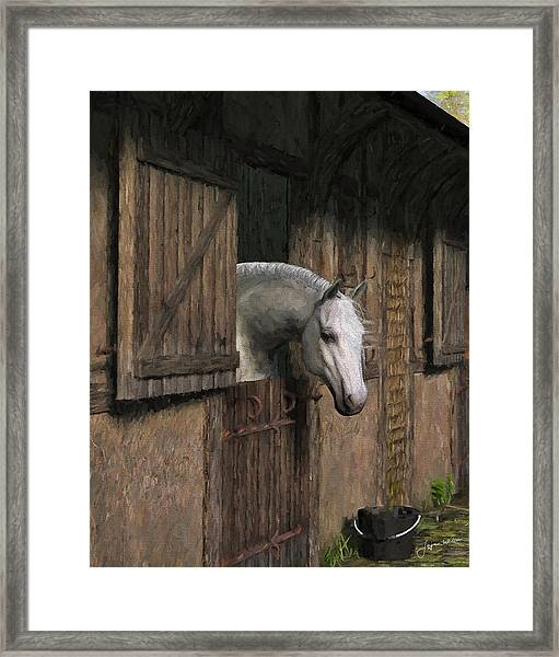 Grey Horse In The Stable - Waiting For Dinner Framed Print
