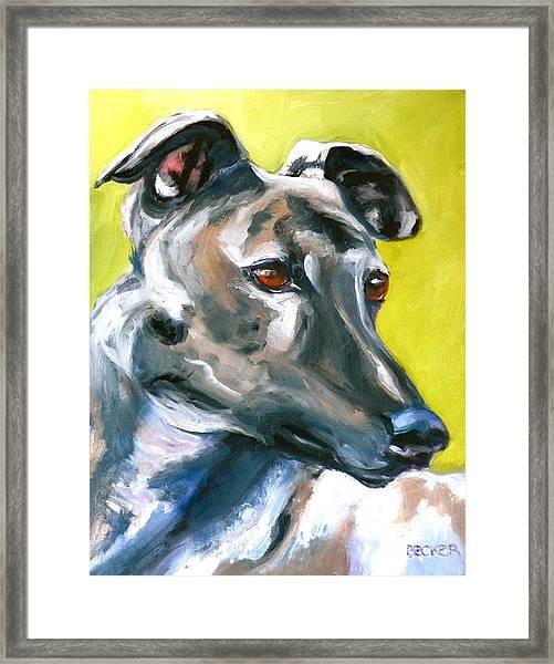 Greyhound Framed Print