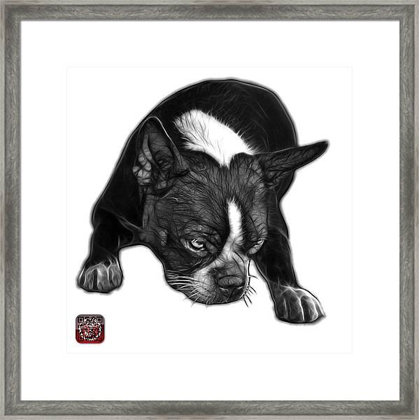 Greyscale Boston Terrier Art - 8384 - Wb Framed Print