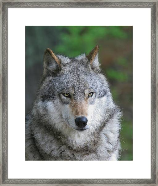 Grizzer Framed Print