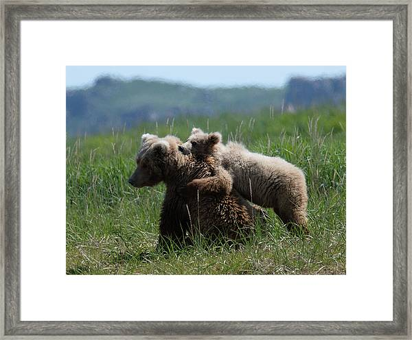 Grizzly  Mother And A Cub In Katmai National Park Framed Print