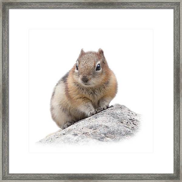Ground Squirrel T-shirt Framed Print