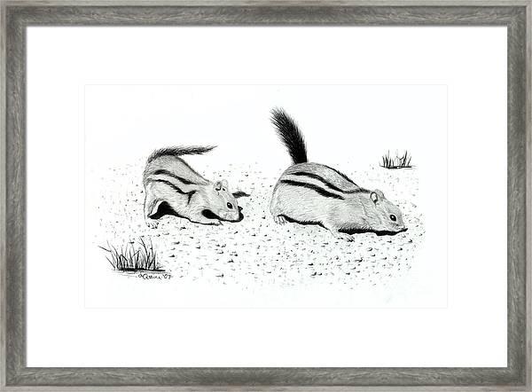 Ground Squirrels Framed Print