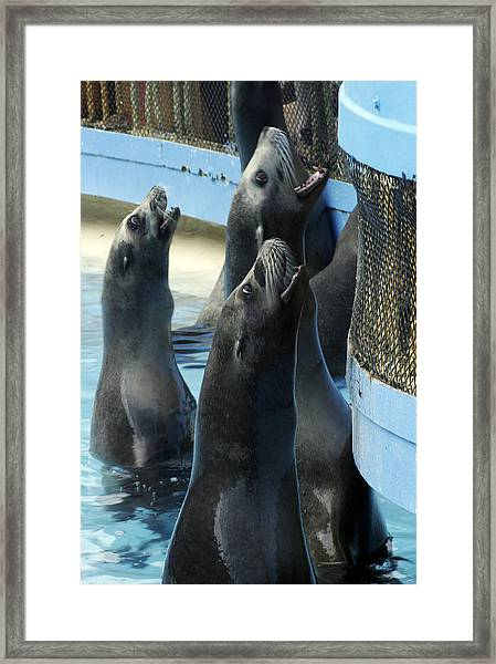 Group Lunch Framed Print