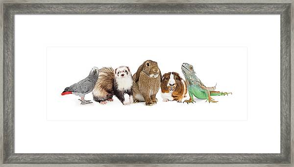 Group Of Small Domestic Pets Over White Framed Print