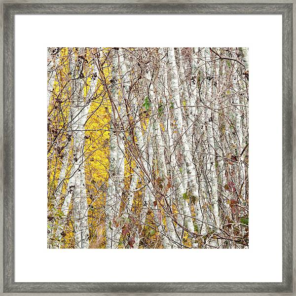 Grove 2 Framed Print