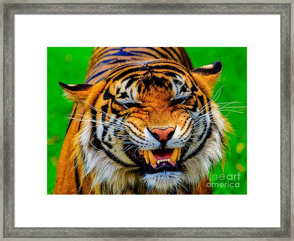 Growling Tiger Framed Print