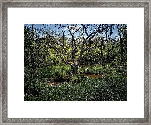 Growning From The Marsh Framed Print