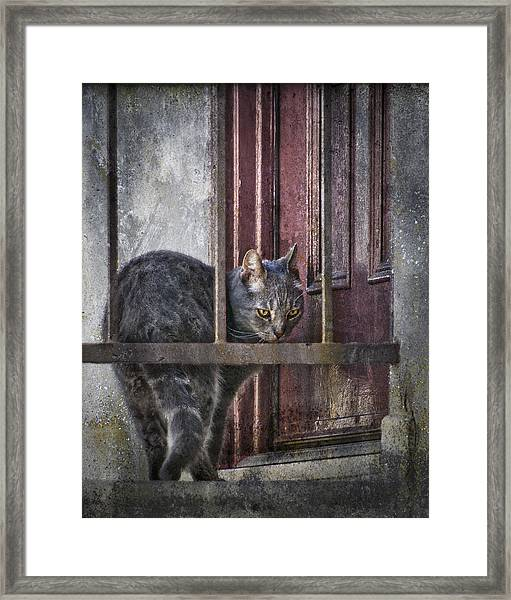 Grunge Cat Framed Print