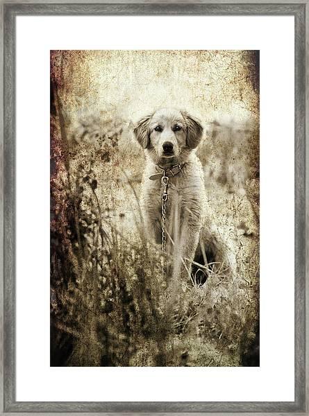 Grunge Puppy Framed Print