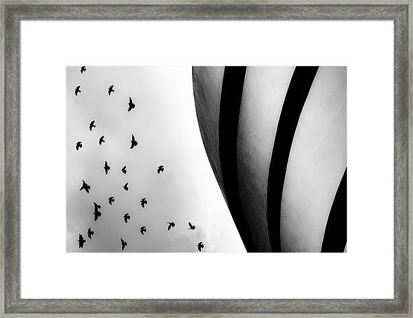 Guggenheim Museum With Pigeons Framed Print