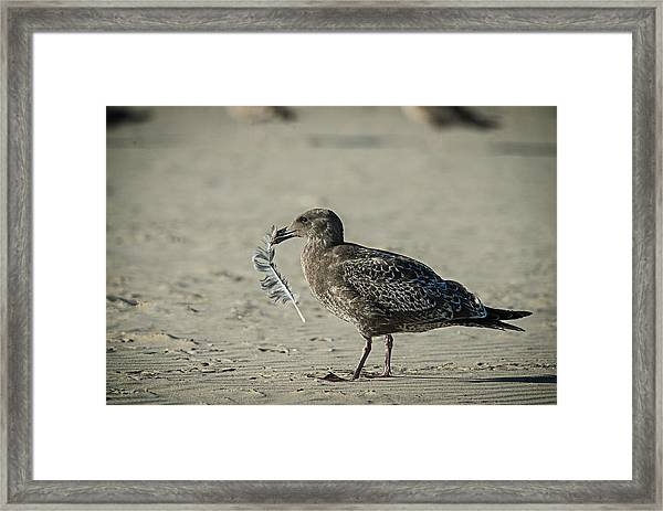 Gull And Feather Framed Print