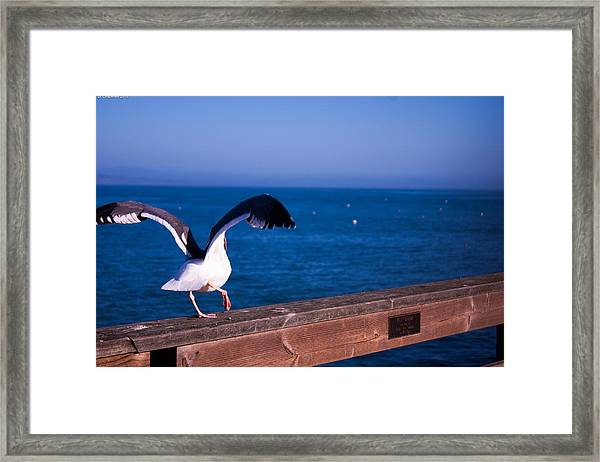 Gull Dance Framed Print