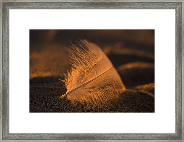 Gull Feather At Sunset Framed Print