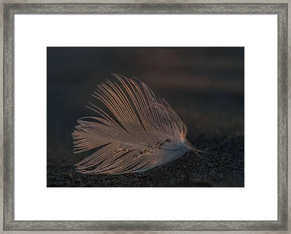 Gull Feather On A Beach Framed Print