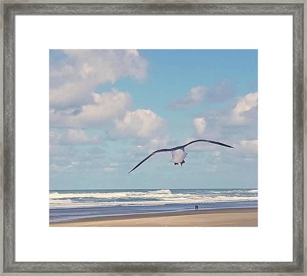 Gull Getaway Framed Print