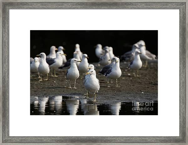 Gulls At The Beach Framed Print