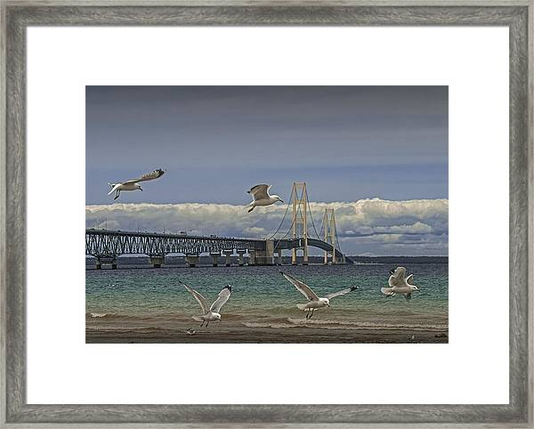 Gulls Flying By The Bridge At The Straits Of Mackinac Framed Print