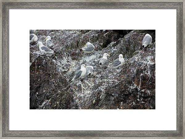 Gulls On An Island Framed Print