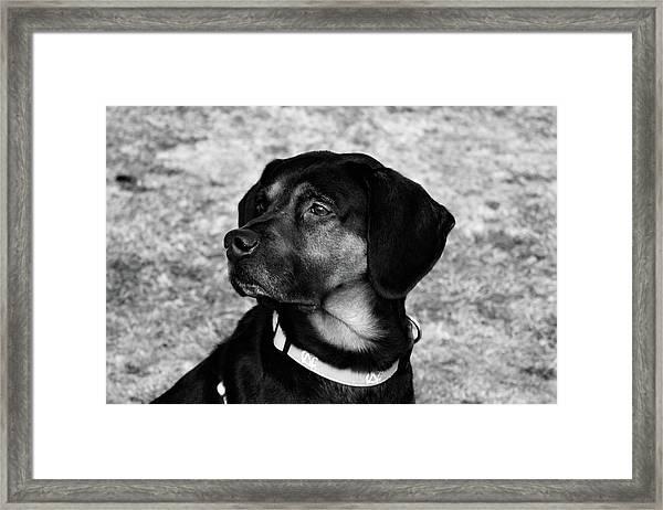 Gus - Black And White Framed Print