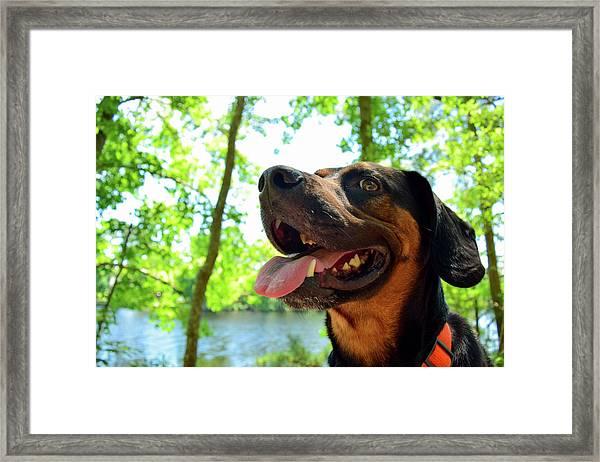Gus On A Hike Framed Print