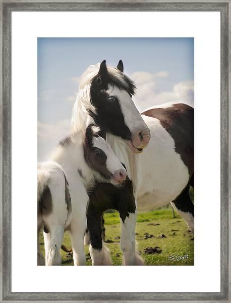 Gypsy Mare And Foal Framed Print by Elizabeth Vieira