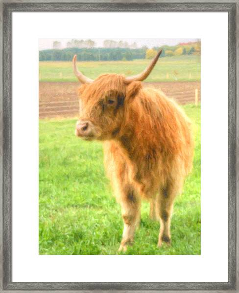 Framed Print featuring the photograph Hairy Coos by Garvin Hunter