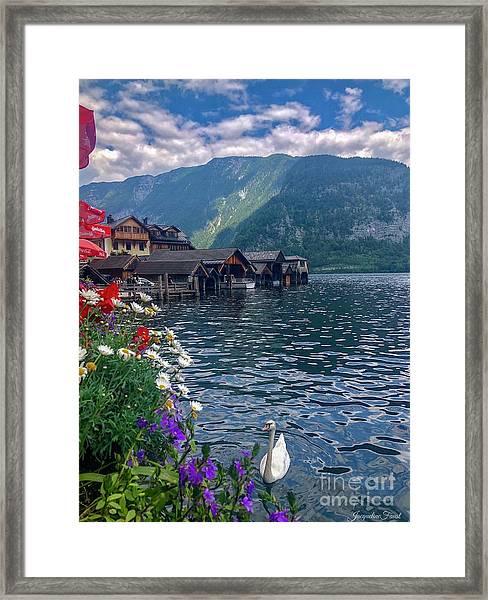 Hallstatt Swan Framed Print