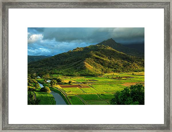 Hanalei Valley Taro Fields Framed Print