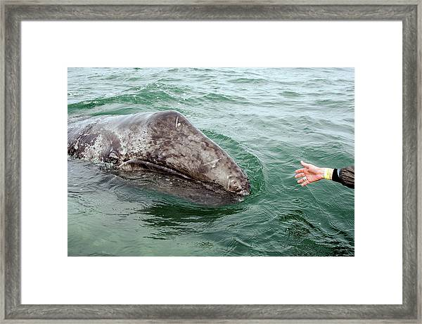 Hand Across The Waters Framed Print