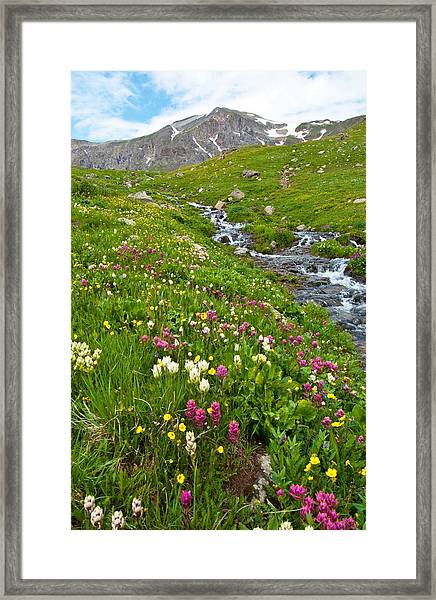 Handie's Peak And Alpine Meadow Framed Print