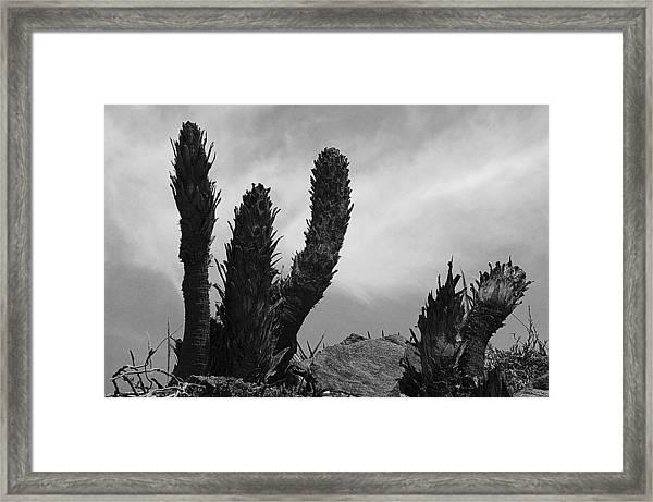 Hands Up Framed Print by Jez C Self