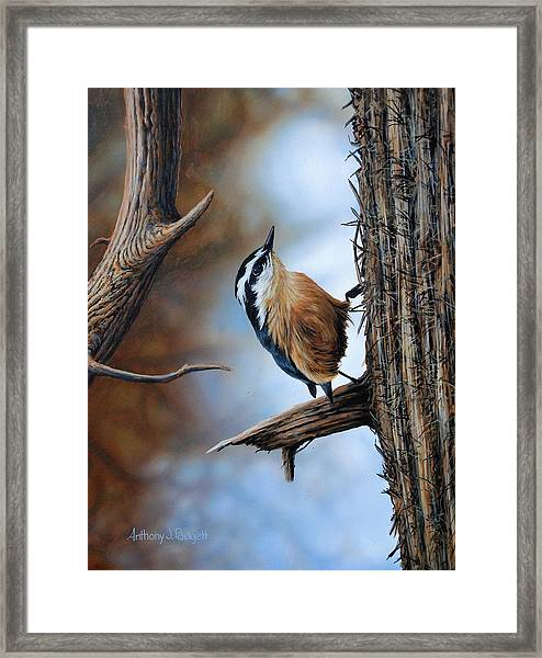 Hangin Out - Nuthatch Framed Print