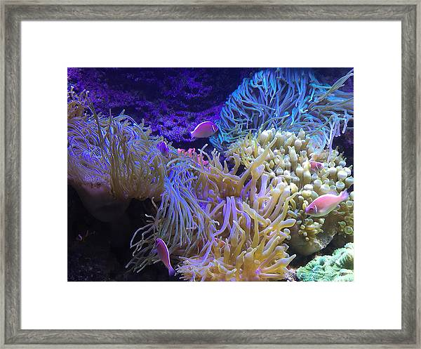 Framed Print featuring the pyrography Hanging Out by Michael Lucarelli
