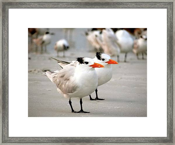 Hanging Out On The Beach Framed Print