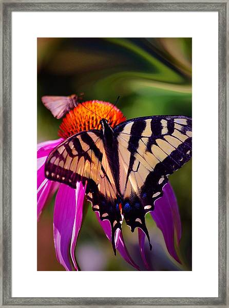 Happiness In Our Own Gardens... Framed Print