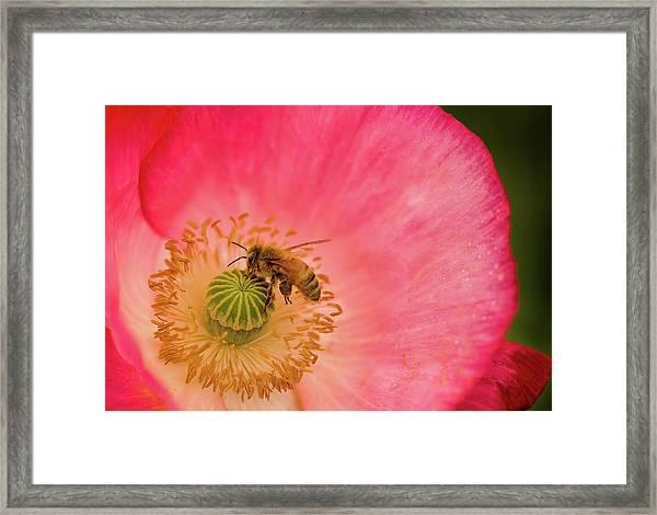 Happy Bee Framed Print