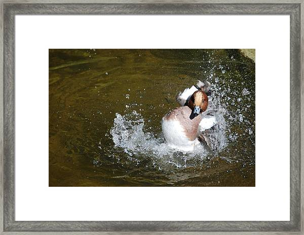 Happy Duck Framed Print