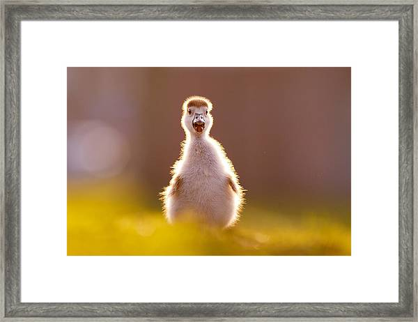 Happy Easter - Cute Baby Gosling Framed Print