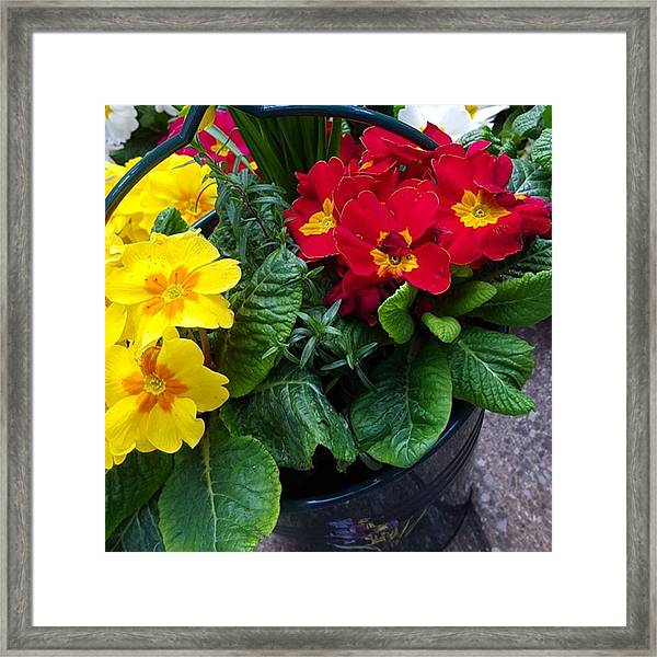 Happy Easter Everyone, Have A Pretty Framed Print by Dante Harker