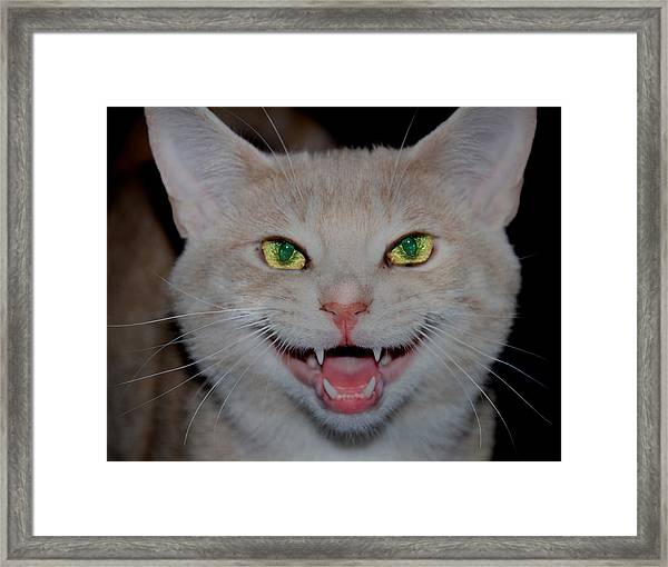 Happy For Spring Cat Framed Print