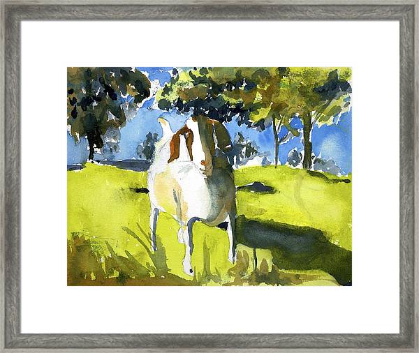 Happy Goat Framed Print