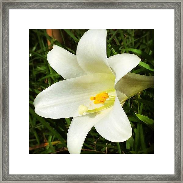 Happy Mothers Day #enlight #lily #flower Framed Print