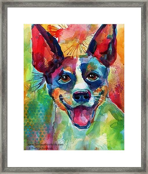 Happy Rat Terrier Watercolor Portrait Framed Print