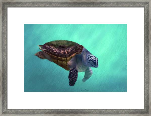 Happy Turtle Framed Print
